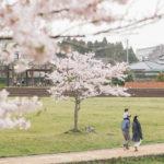東戸塚の桜のある公園と子連れにも優しいお花見スポット